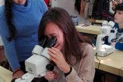 Girls meet the role models of the Biology faculty and learn to recognize insects under a microscope